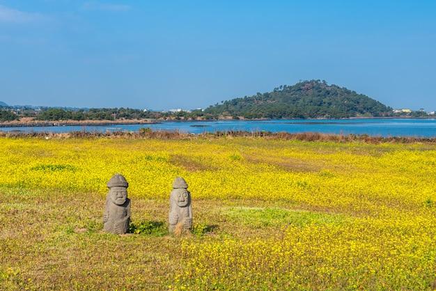 Canola field at seongsan ilchulbong, jeju island, south korea.