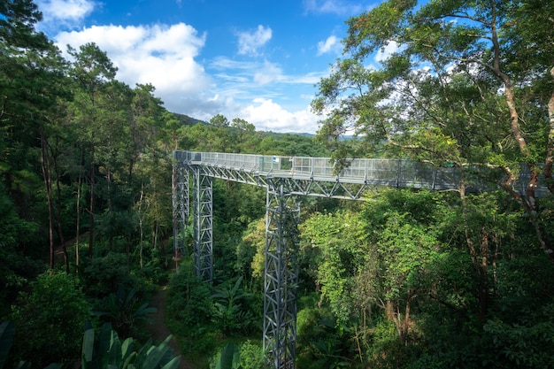 Canopy walkway at the impressive queen sirikit botanic gardens in the mountains.