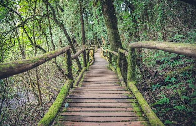 열 대 숲에서 캐노피 산책로. 정글로의 다리