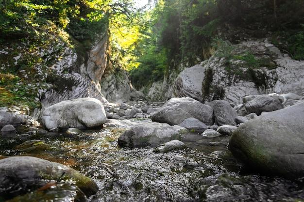 협곡, 산 강이 화이트 록스, 아열대 숲 풍경 사이를 흐릅니다. 유-회양목 숲, 소치 국립 공원