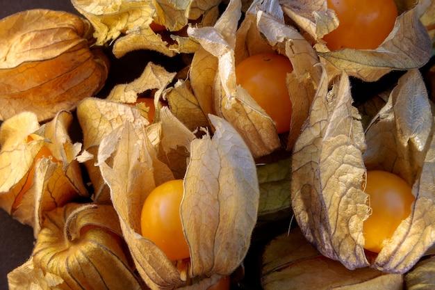 ケープグーズベリーまたはホオズキ(physalis peruviana)