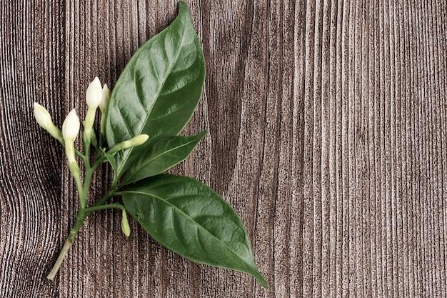 Мыс жасмин цветы на деревянном фоне