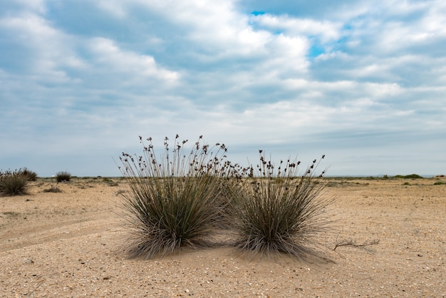 케이프 러쉬, 이국적인 식물
