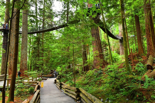 Подвесной мост на вершине дерева капилано в ванкувере, канада