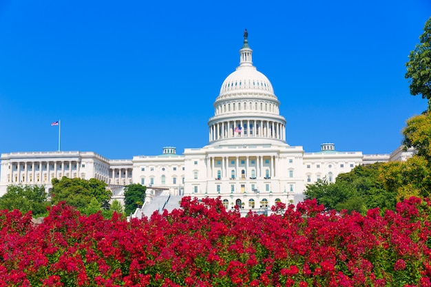Capitol building washington dc pink flowers usa