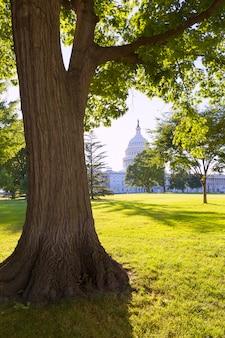 Capitol building washington dc sunset garden us