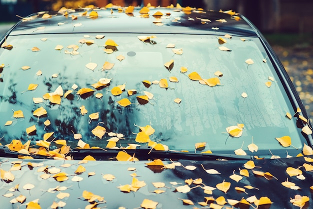 Car covered with autumn leaves. autumn background. rainy autumn weather. yellow leaves fall on the car.
