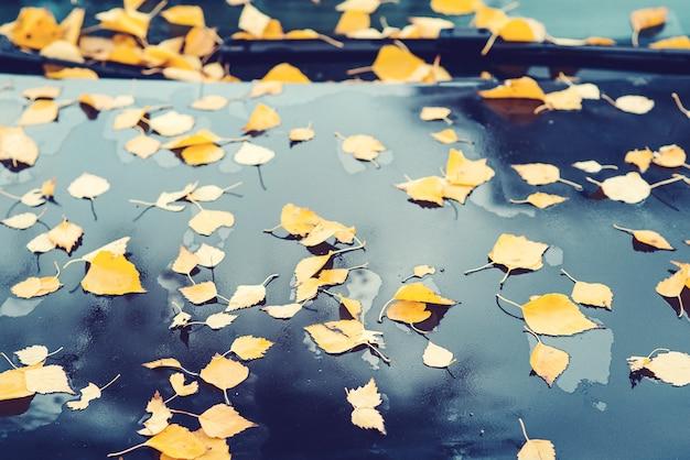 紅葉に覆われた車。秋の背景。雨の秋の天気。黄色の葉が車に落ちる。