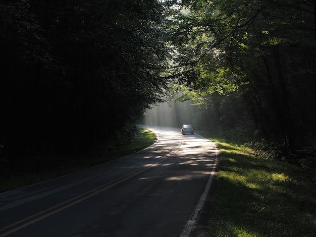 Автомобиль едет по дороге в лесу в окружении деревьев под солнечным светом