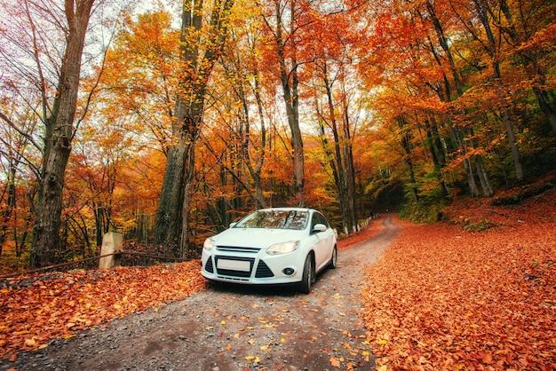 Car on a forest path. autumn landscape. ukraine. europe