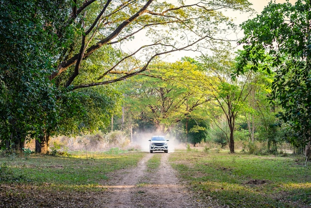 Car in the forest road, adventure travel