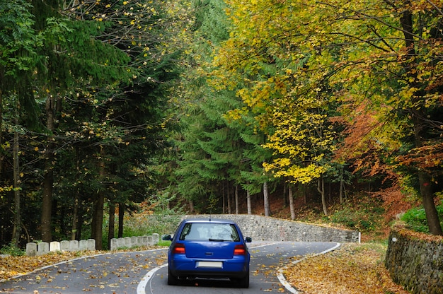 Car in the forest at transfagarasan road
