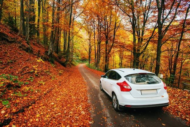 숲길에 차입니다. 산 우크라이나에서 아름 다운도