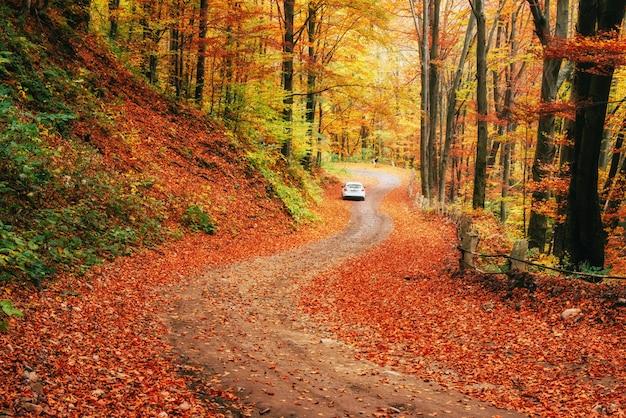 숲길에 차입니다. carpathians.