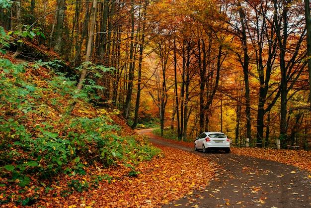 숲길에 차