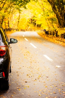 Car on the road in autumn forest