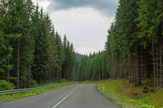 Karpaty 산 사이의 그림 같은 고밀도 소나무 treee 숲의 자동차 도로.