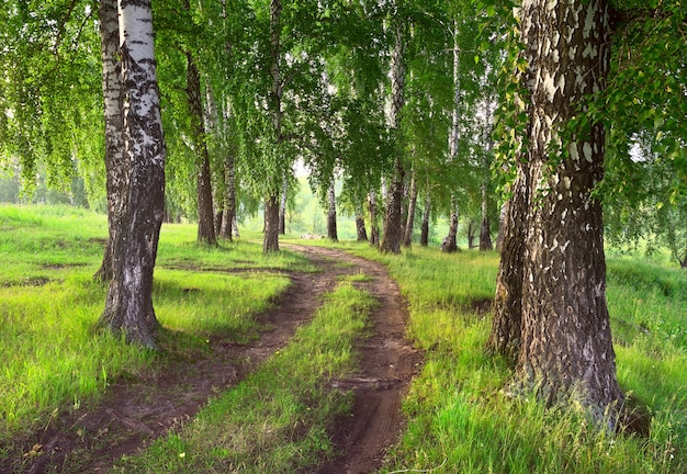 나무 줄기 사이의 푸른 잔디 한가운데에 자동차 트랙