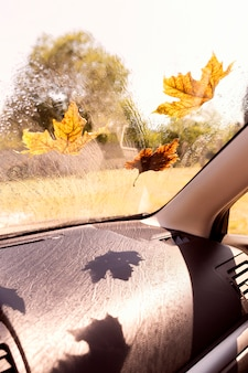 Car window with autumn leaves