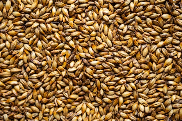 Caramel malt grains dark malted barley for brewers
