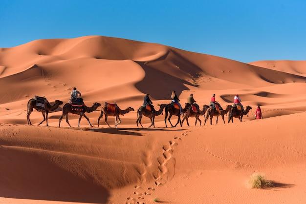 Caravan walking in merzouga sahara desert on morocco