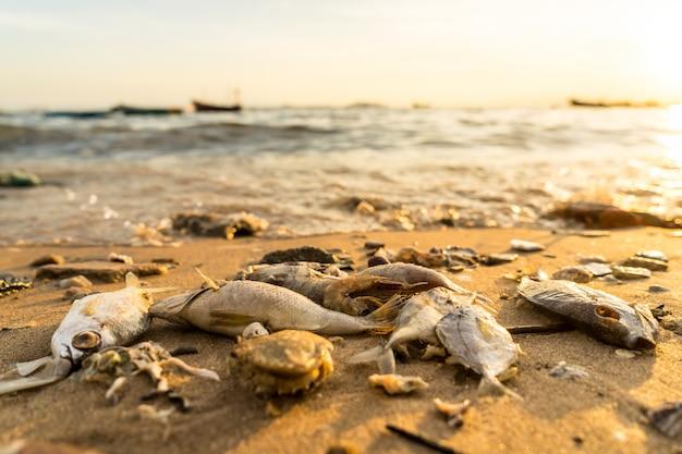 日没時にビーチで海の生き物の死体