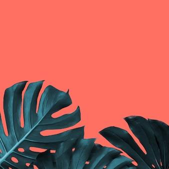 Карточка с рамкой из вечнозеленых листьев монстеры на цветном живом коралле, копией пространства. модный модный цвет.