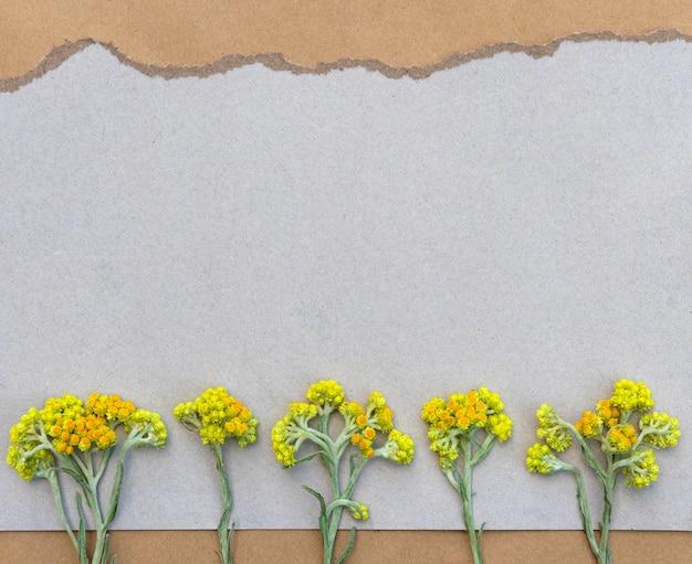 디자인을 위한 복사 공간이 있는 찢어진 가장자리가 있는 회색 종이에 야생 마른 노란색 꽃이 있는 카드