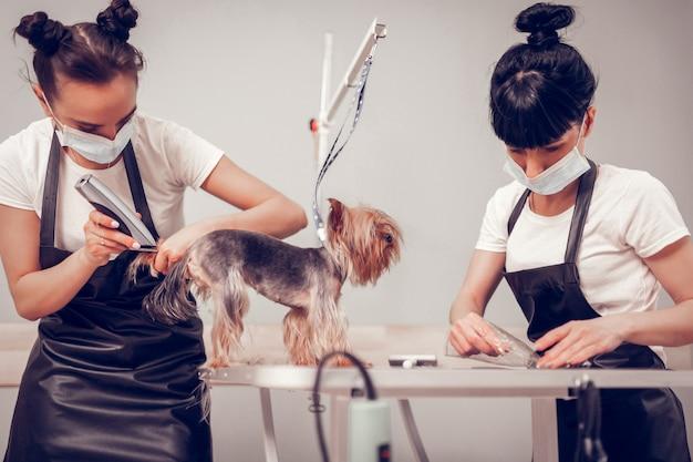 犬の世話。制服を剃ってかわいい犬の世話をしている2人の勤勉な女性