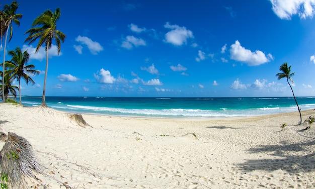 カリビアンビーチとヤシの木。楽園。休暇と観光の概念。