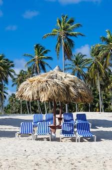 카리브 해변과 야자수