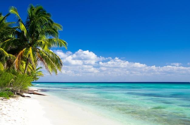 カリブ海のビーチとヤシの木