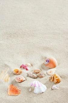 Caribbean beach sand shells tropical summer vacation