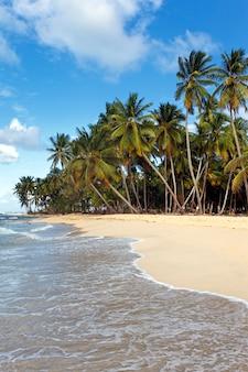 Карибский пляж с пальмами и голубым небом