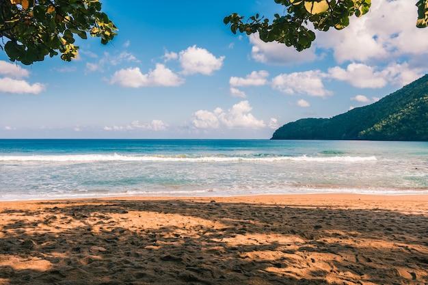 화창한 날에 야자수와 파도와 카리브 해변