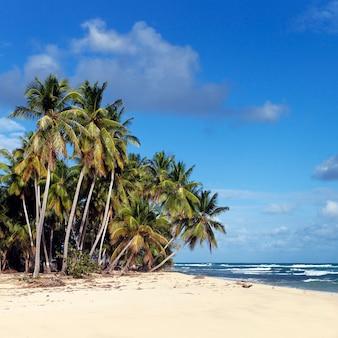 Spiaggia caraibica con palme e cielo blu