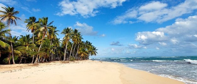 Caribbean beach with palm trees and blue sky
