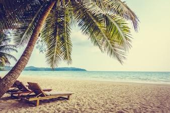 Caribbean coconut holiday landscape sea
