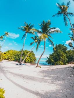 ビーチでカリブ海のヤシの木