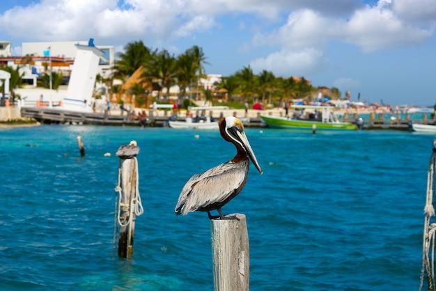 Caribbean pelican on a beach pole