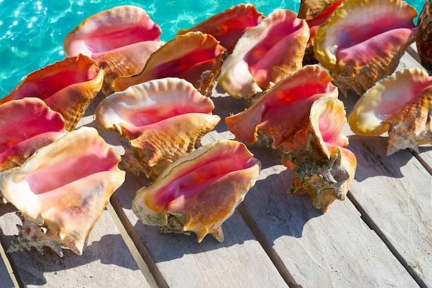 メキシコの桟橋にカリブ海の貝殻