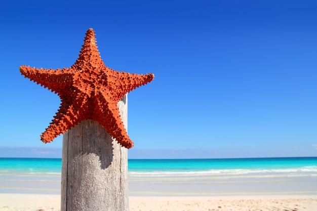 Caribbean starfish on wood pole beach