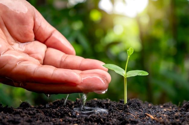 흐릿한 녹색 자연 배경을 가진 비옥한 토양에서 자라는 아기 식물을 돌보고 물을 줍니다.