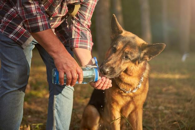 ジャーマンシェパードが水分を補給しながら手のひらから飲むのを手伝う思いやりのある犬の飼い主
