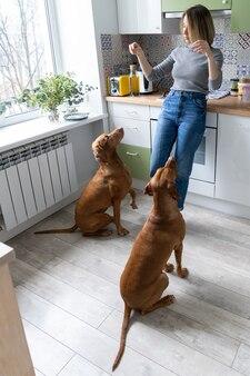 집에서 개를 돌보는 중년 여성은 부엌에서 2명의 정중한 Wirehaired Vizsla를 훈련합니다. 프리미엄 사진