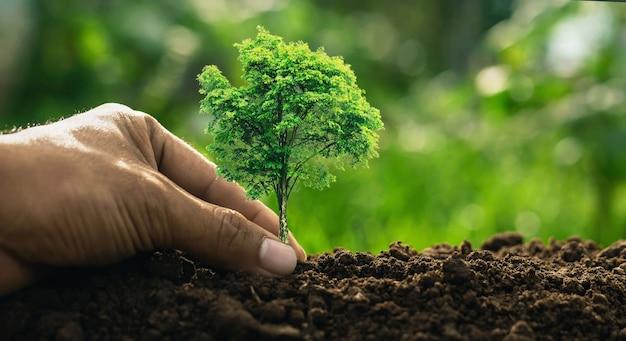 손에 작은 푸른 나무 돌보기