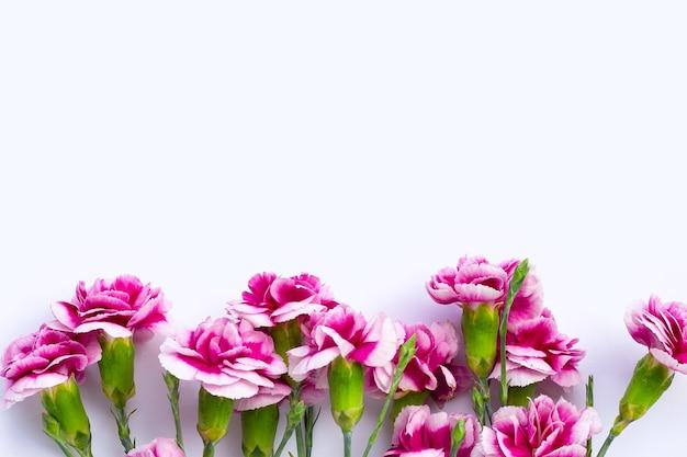 白い表面にカーネーションの花
