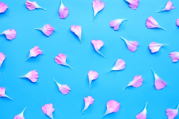 Carnation flower petals on blue background.