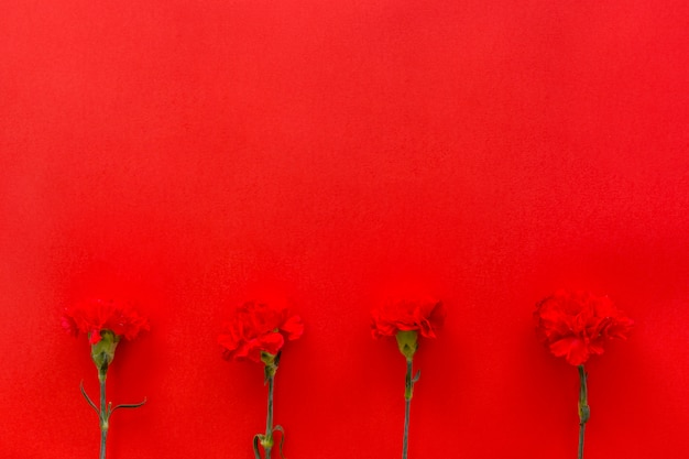 Carnation flowers arranged on bottom of red background