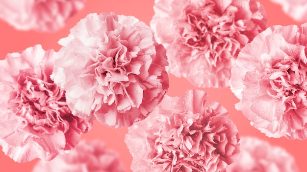 Carnation flowers on coral color background